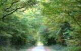 Paucourt et sa forêt